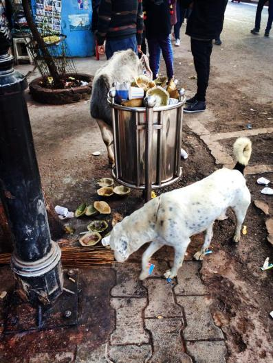 Stray dogs & garbage.