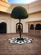 A tree on the grounds of the UdaiVilas.